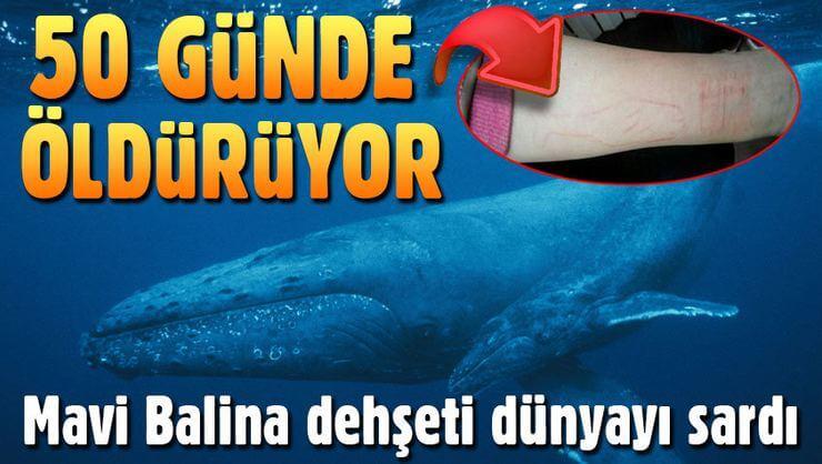 mavi-balina-cilginligi-nedir